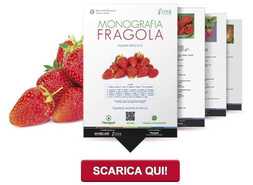 Monografia Fragola - Volume Terzo 2015
